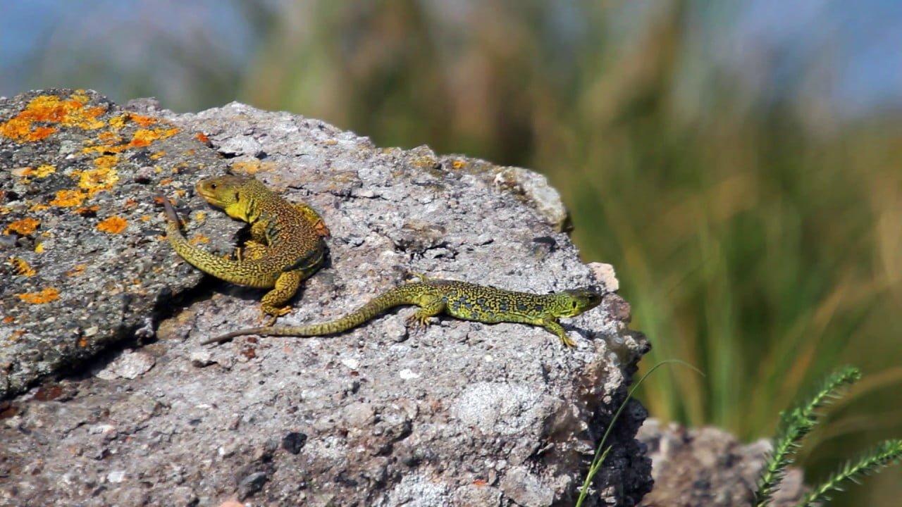 Température idéale et alimentation d'un reptile ?